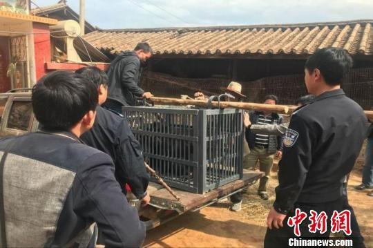 ▲▼村民誤把黑熊當狗,還帶回家養3年。(圖/翻攝自中新網)