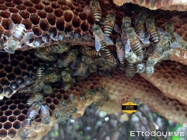 (圖/粉絲頁「城市養蜂 Urban Beekeeping」提供,請勿隨意翻拍,以免侵權。)