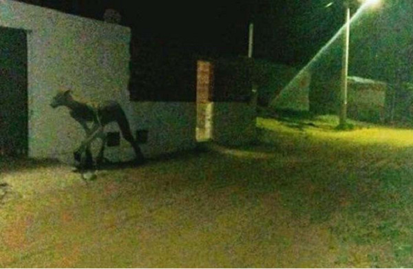 半人獸?阿根廷驚現4腳怪物。(圖/翻攝自YouTube用戶「UFOmania」)