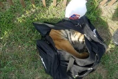 小老虎塞「黑色旅行袋」偷闖美墨邊界 事跡敗露竟丟包