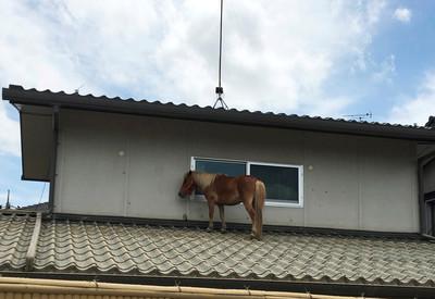 「泥巴馬」站屋頂躲3天洪水 日本暴雨看見堅強生命力