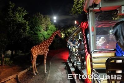狂野玩清邁!超刺激叢林飛索 闖入世界最大夜間動物園