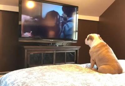 電影咖鬥牛犬超入戲!見伽椰子「爬出來」 激動吠叫:快跑