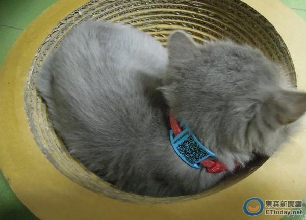 用QR Code 找回失蹤寵物 Qme吊牌免費領取