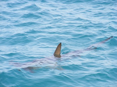 海邊用空拍機拍妻小!見巨型「死神陰影」快速移動 爸驚喊:快回來!
