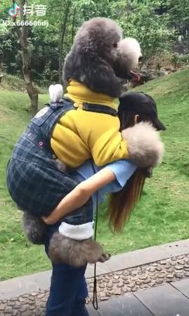 貴賓爬山要媽媽揹,看鏡頭甜笑。(圖/翻攝自抖音APP用戶「x666666dj」)