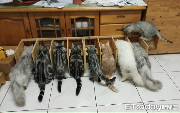 ▲爸為搶食貓咪打造「隔板餐桌」。(圖/網友吳佳憲授權提供)