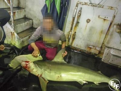 割鯊鰭棄身、宰海豚當誘餌!台5艘漁船爆海上非法「血腥屠殺」