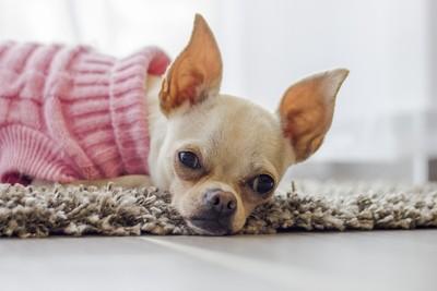 當藥物注射進血管牠呼吸慢慢停止! 獸醫告白寵物安樂死:無法回頭的決定