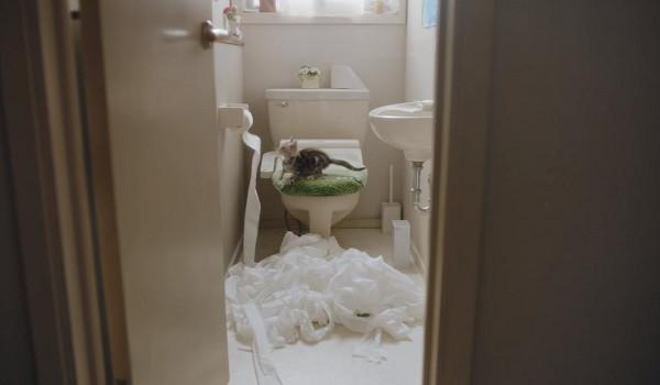 ▲▼Google廣告攻陷貓奴! 「7種崩潰幸福感」內行看了都點頭。(翻攝自YouTube/Google Japan)