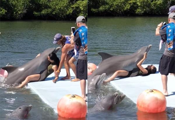 名正妹旅客遭到海豚非禮。