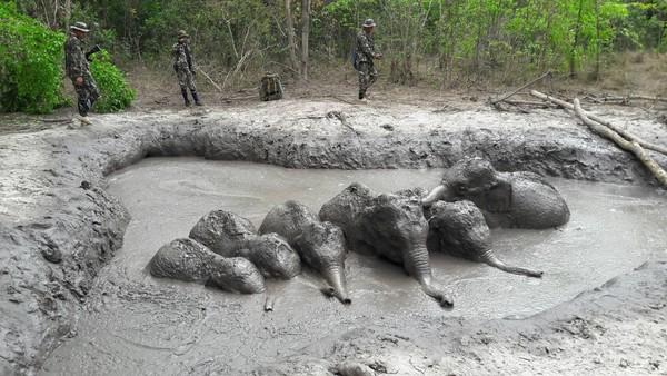 ▲泰國國家公園6隻小象受困泥坑裡,經過兩天才獲救。(圖/翻攝自泰國塔普蘭國家公園粉專)
