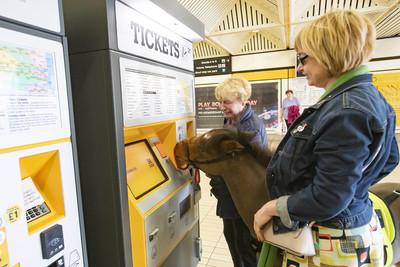 英國首匹!2歲「導盲馬」地鐵初體驗超淡定 將前進倫敦伴她餘生