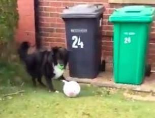 霸道汪不讓郵差送信 ... 陪牠踢完足球就可以了 網笑歪:陪練員4ni?