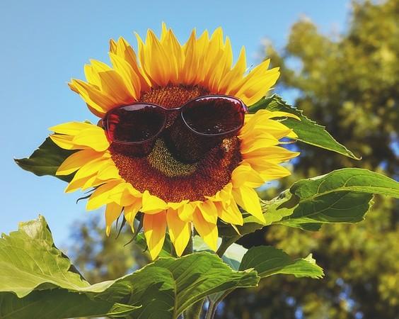 ▲紫外線與空氣中的PM2.5都是促使皮膚老化、變差的原因之一。(示意圖/Pixabay免費圖庫)