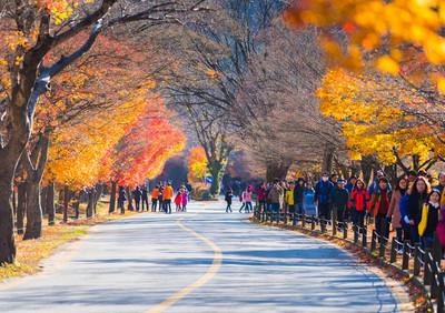 享受韓國火燒般的秋天-內藏山、大屯山、雪嶽山