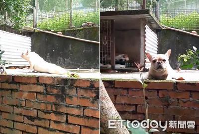 影/法鬥掰咖吃力拖地爬 娘揭「心機真相」網笑翻:還我眼淚!
