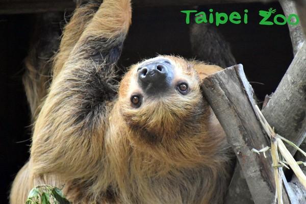 台北市立動物園熱帶雨林館。(圖/台北市立動物園提供)