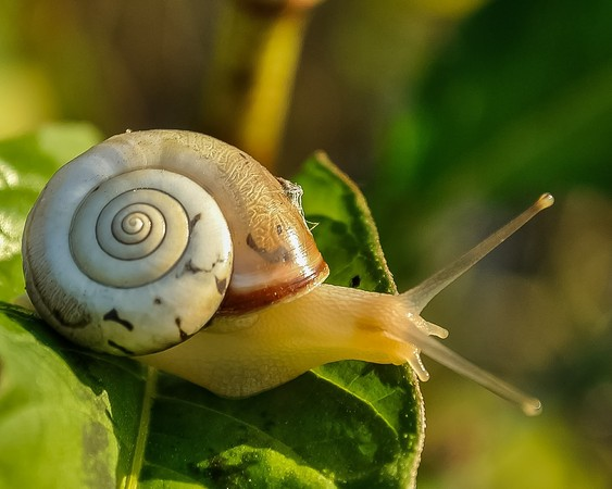 蝸牛。(圖/取自免費圖庫Pixabay)