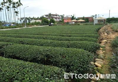 台灣茶葉該賣到「用筷子」國家? 「全球茶消費大國」到第10名才用筷子
