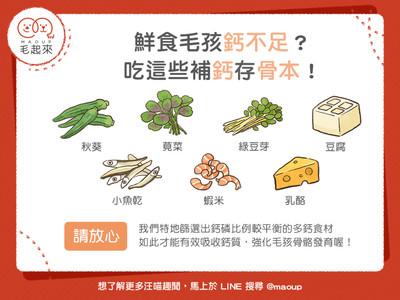 毛孩鈣磷吃不夠!「7黃金食物」超補骨本...這些完勝牛奶必選