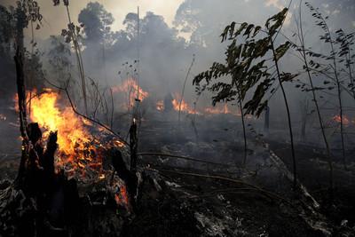 馬克宏宣布G7砸7億滅亞馬遜大火 馬奎斯:美國沒有承認提供協助