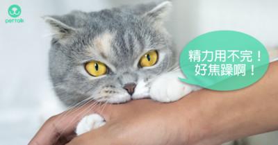 難不成是返老還童? 貓咪「甲狀腺功能亢進症」5大易被察覺症狀