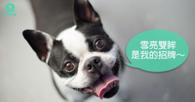 紅紅是警訊! 狗狗最好發的眼疾:乾眼症…常被誤診成過敏反應