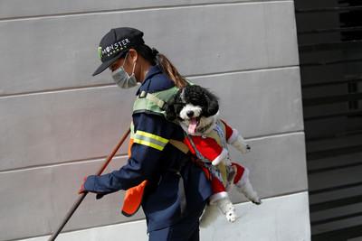 28歲正妹「背愛犬掃街照」瘋傳!男友送狗陪伴她「一起上班」暖翻網友