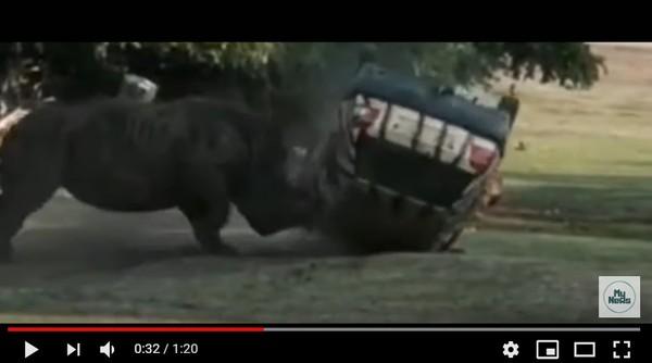 動物園犀牛突然抓狂攻擊! 巡邏車慘變「玩具」驚險倒地又翻又滾。(圖/翻攝自YouTube/MY NEWS TV)