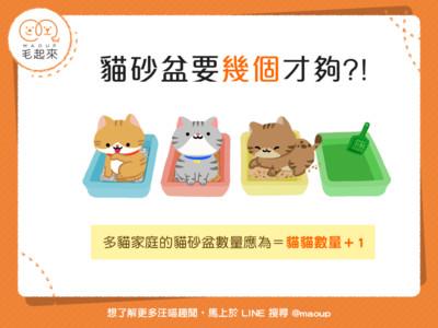貓砂盆幾個才夠?「1招」秒算正確數量...共用超沒安全感!