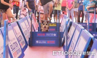 萌狗用力飛越柵欄!中和公園9/28辦「迷宮挑戰」 還可免費打疫苗