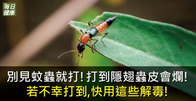 別見蚊蟲就打!打到隱翅蟲皮會爛 可用碘酒應急解毒