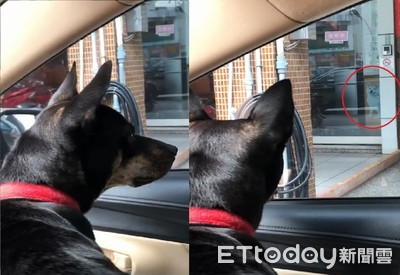 黑狗車窗見「遠處微笑柴」氣炸!爸「跳針式安撫」笑爛網友