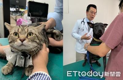 來永和、板橋店!寵物雲會員享免費健檢 還有好康優惠拿不完