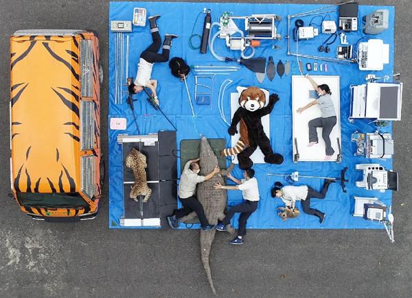 ▲▼動物園行動醫療車開箱! 2保育員趴地「抱緊鱷魚」萌炸。(圖/台北市立動物園提供)