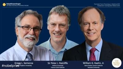 諾貝爾生醫獎3得主 拼出細胞缺氧時的運作法則「癌症治療也靠它」