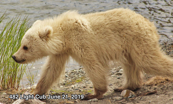 (圖/翻攝自Facebook/Katmai National Park & Preserve)