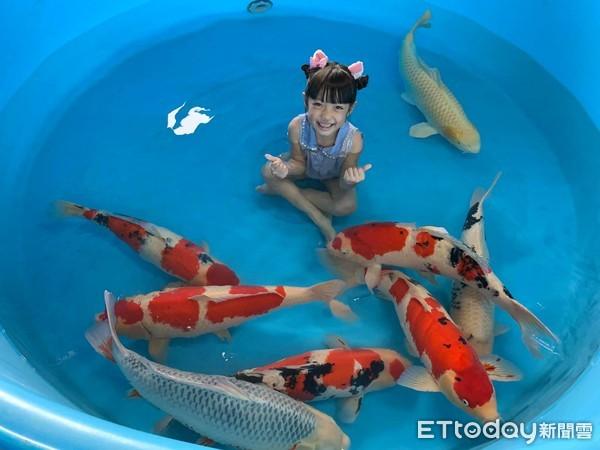 ▲女兒朵莉泡在水池中,和錦鯉們開心遊玩。(圖/有點毛毛的/飼主陳厚任授權提供)