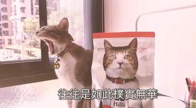 網紅喵「惡整奴才」狂飛國外買飼料 還冷笑:貓咪的快樂往往樸實無華且枯燥