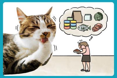 貓科營養學博大精深 威豪營養中心幫你想在最前面