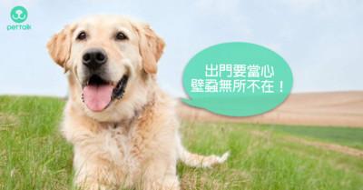 守在草叢尖端「8腳小生物」 一點都不夢幻的可怕疾病:犬艾利希體症