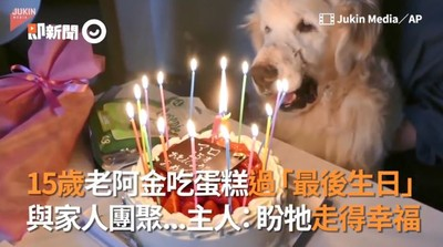 家人齊聚為15歲老阿金過「最後生日」 牠被攙扶坐蛋糕前「微笑許願」