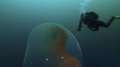 海中驚見「1米高巨蛋」 DNA檢驗證實…裡面正在孵不得了的東西