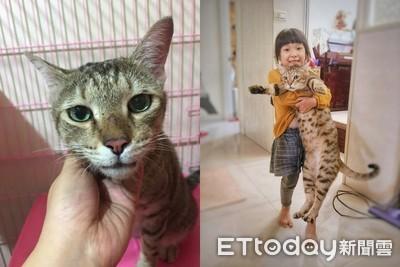 愛滋貓被收編後第一個找上「怕貓老爸」 從此體重直線上升