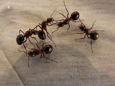 大量螞蟻竄租屋處! 她狂試6種方法都無效 網推「超有感大絕」:2周全消滅
