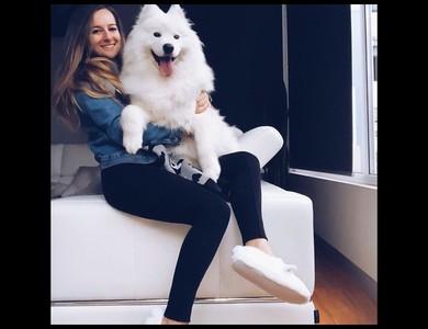 胖嘟嘟薩摩耶犬被夾在沙發縫隙中 下一秒「倒推嚕」成功脫逃