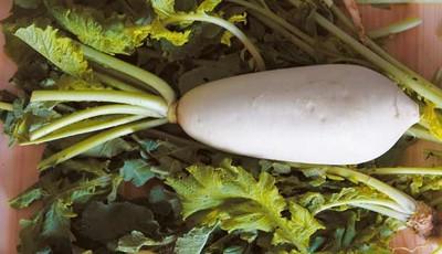 「平民人參」白蘿蔔能防癌、顧血管 但3種人要少吃