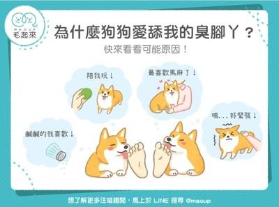 【汪喵冷知識】為什麼狗狗愛舔我的臭腳丫?