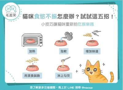 【汪喵餵養知識】貓咪食慾不振?五招重拾吃飯樂趣